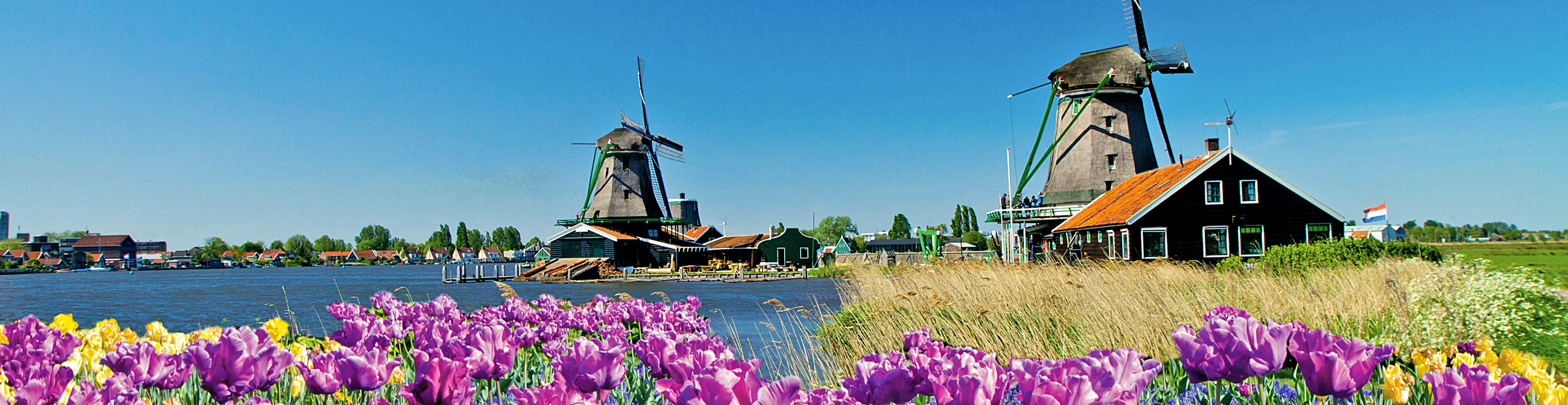 Tulips and Windmills